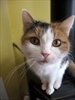 Cat lost in 2009 to return to Alberta owner-Image1