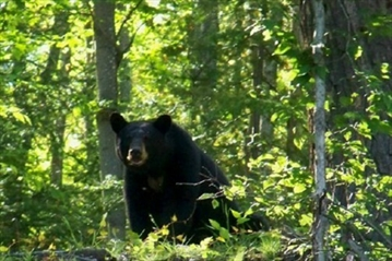 Security, summit planners prepared for bears