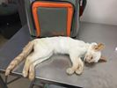 Dead Kitten