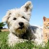 Microchip implantation for your pet