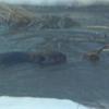 Backyard beaver