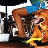 Dogs at pubs and cafes: why not?