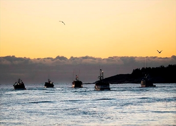 Fishing boats head from the harbour in West Dover, N.S. on Saturday, Nov. 30, 2013. Global fishing efforts are so wide ranging that fishing fleets covered more than 460 million kilometres in 2016 -- a distance equal to going to the moon and back 600 times. THE CANADIAN PRESS/Andrew Vaughan
