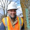 Emerald ash borer in Guelph