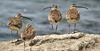 PLATO: Tracking birds a fun hobby