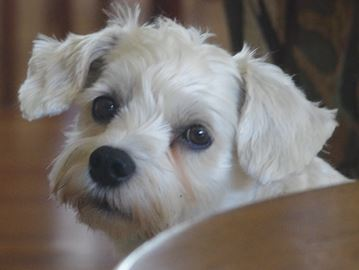 Halton resident urges caution on choice of dog treats