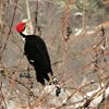 Midland-area birders take part in annual Christmas count