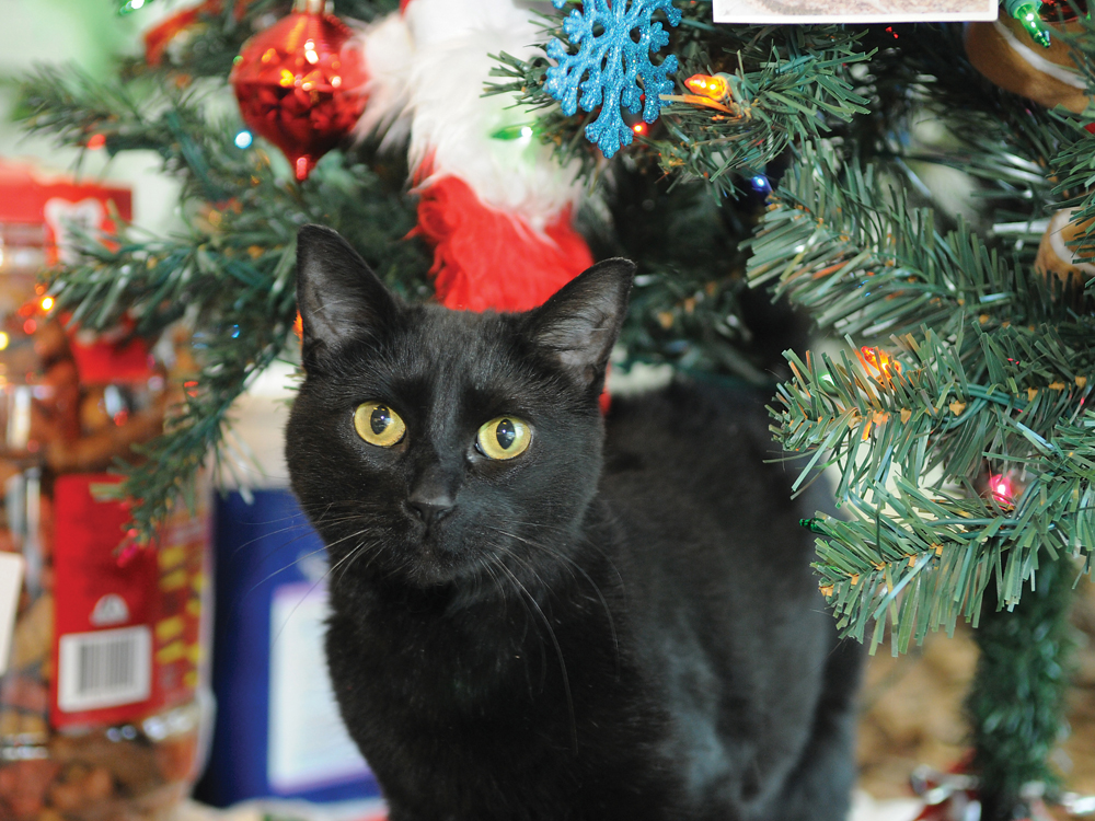 Oshawa Animal Services Lost And Found Cats