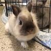 Adopt A Pet: Corbin needs a home