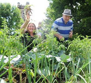 Community Garden For Diabetes Patients