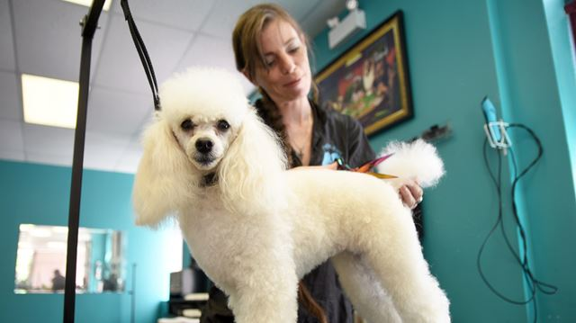 Dog Grooming Jobs Ontario
