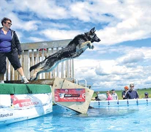 Dogs, owners discover joys of dock diving– Image 1