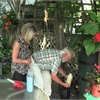 Your Life gardening: Tackling common summer plant diseases