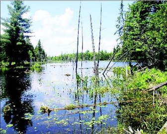 Land trust conservancy finalizes agreement for Keddy Nature Sanctuary– Image 1
