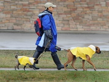 Heavy rain and thunderstorms forecast for Hamilton this morning and on and off into the afternoon with between 20-40 mms of accumulation possible.