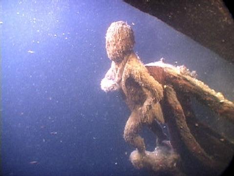 Rogue Divers Visit Shipwreck Sites Thespec Com