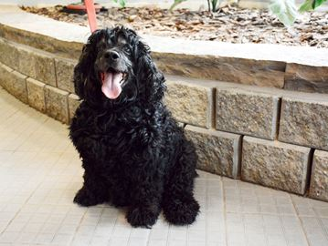 Adopt A Pet: Walter