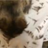 Adopt-A-Pet: Ava needs a home