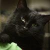 Adopt-A-Pet: Harper needs a home