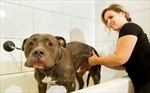 Montreal adopts controversial pit bull ban-Image1
