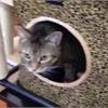 Adopt-A-Pet: Dorothy needs a new home