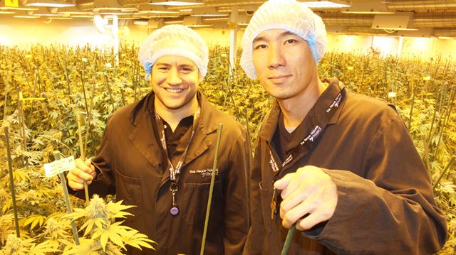 Clearview medical marijuana producer has new owner