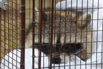 Halton experiencing higher than average rabies cases