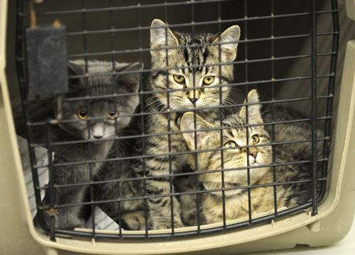Quebec  Cats Hoarding Situation Humane Society
