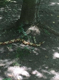Snakes on the loose in two Canadian cities-Image1