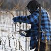 Effects of cold winter on Niagara wine country unclear