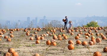 Incredible weather drew record crowds to the Dyment Farm Pumpkin Patch on Sunday. Betty Dyment says crowds were their biggest ever. Not only were the temperatures a balmy 19 C and the pumpkins plentiful, the view of the city from the pumpkin patch was spectacular.