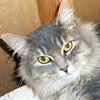 Felines need fostering