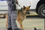 Police dogs searching for burglar