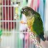 Oakville Milton Humane Society Pet of the Week