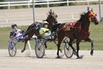 xcitement builds for Confederation Cup at Flamboro Downs