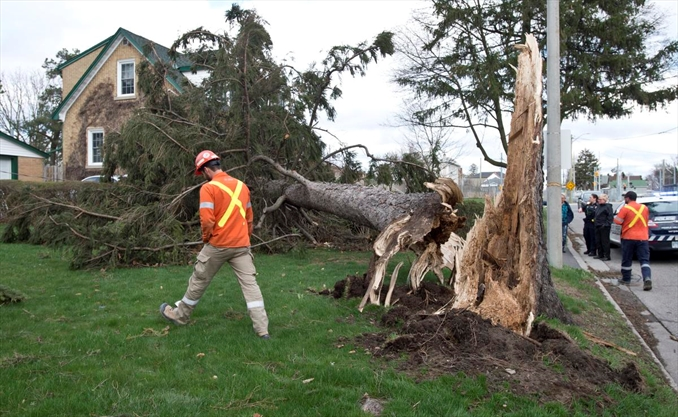 High Winds Cause Damage Across Waterloo Region
