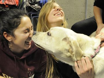 Burlington library puppy visits help teens with exam stress