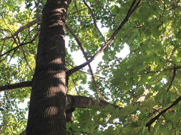 Trees bylaw