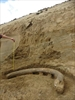 Austrian experts recover giant tusks of rare mammoth breed-Image1