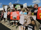 Minnesota man who killed lion keeps low profile amid outrage-Image1