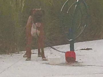 Milton sisters save dog left tied up at park in sweltering heat