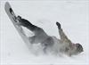 Maritime provinces brace for blizzard-Image1