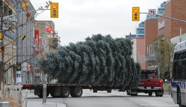 curbside christmas tree collection begins in cambridge