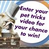 Crazy pet video contest