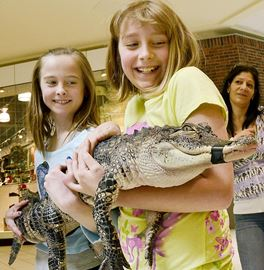 Amy Simioni, 10, and Emma Simms, 9 holding an American alligator.