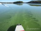 Beware of blue-green algae