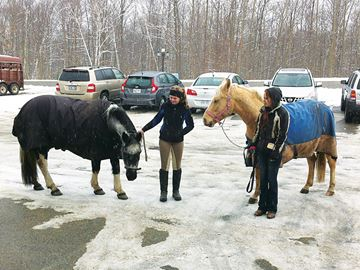 Ponies employed to express disapproval of Tiny Township gun-hunting request