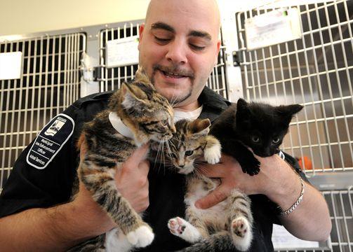 Brampton Animal Shelter Cats