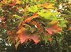 Oak Ridges Moraine in the fall