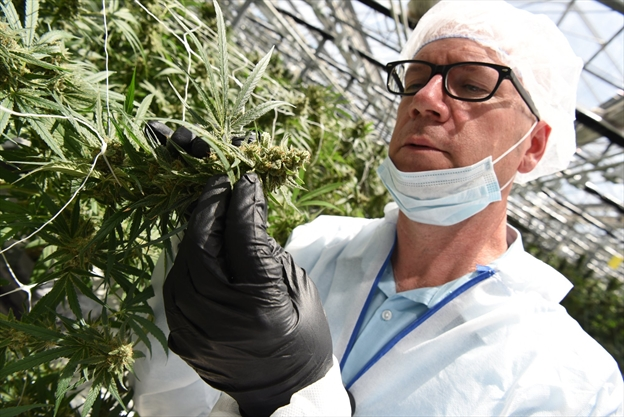 CannTrust celebrates perpetual harvest cannabis facility in Pelham
